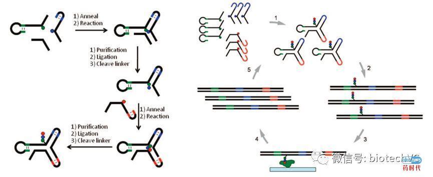 DELT助力新药发现(DNA编码化合物库技术漫谈)