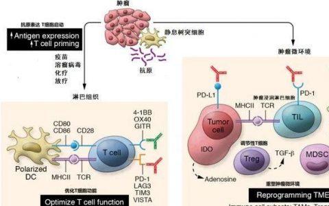 肿瘤免疫及其组合疗法,治愈癌症的希望?