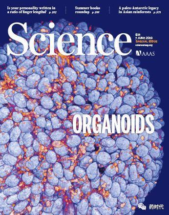 类器官荣登《科学》封面!顶级杂志发专刊隆重推荐新热点!