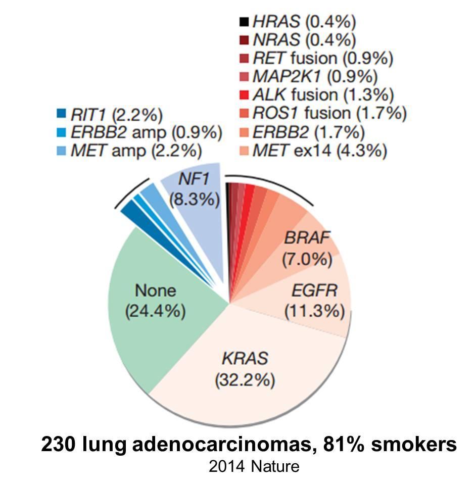 """晚期肺癌怎么""""诊+治"""",看MSKCC的临床试验总结"""