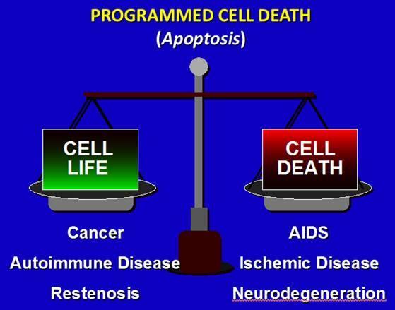 细胞凋亡靶向小分子药物研发和应用前景浅析 | 附我心目中的细胞凋亡科研大牛榜