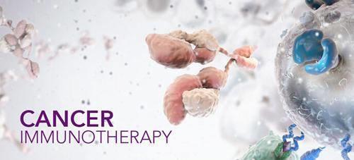 肿瘤免疫疗法最新进展之理论篇:PD-1也许是前无古人,后无来者