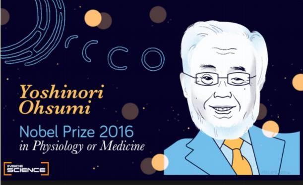 自噬诺奖一周年 | 靶向自噬的肿瘤药物研发前景浅析