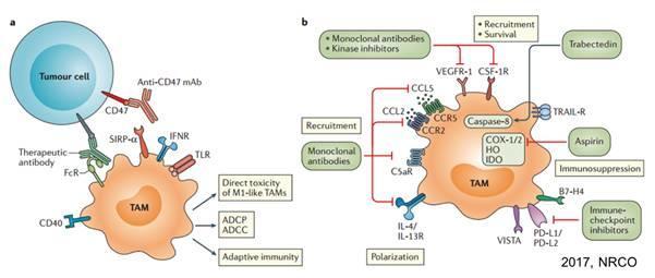 原创首发 | 靶向巨噬细胞的肿瘤药物研发进展
