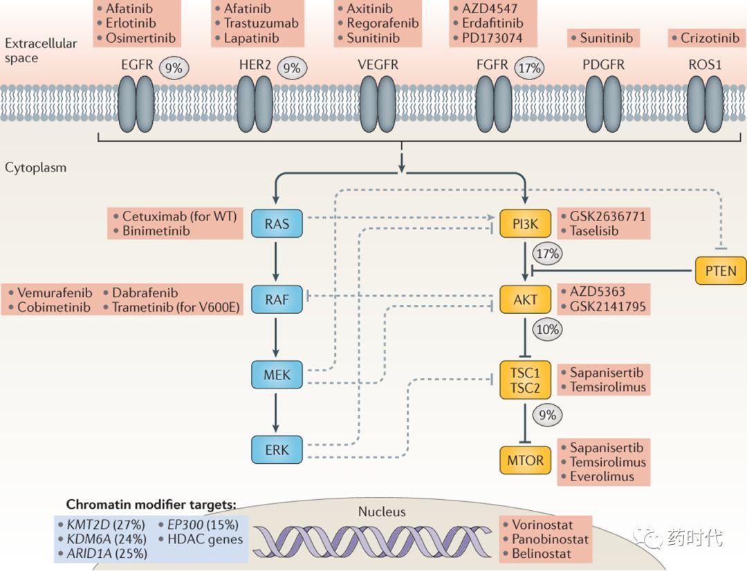 紫薯博士专栏 | 膀胱癌免疫、靶向疗法最新进展