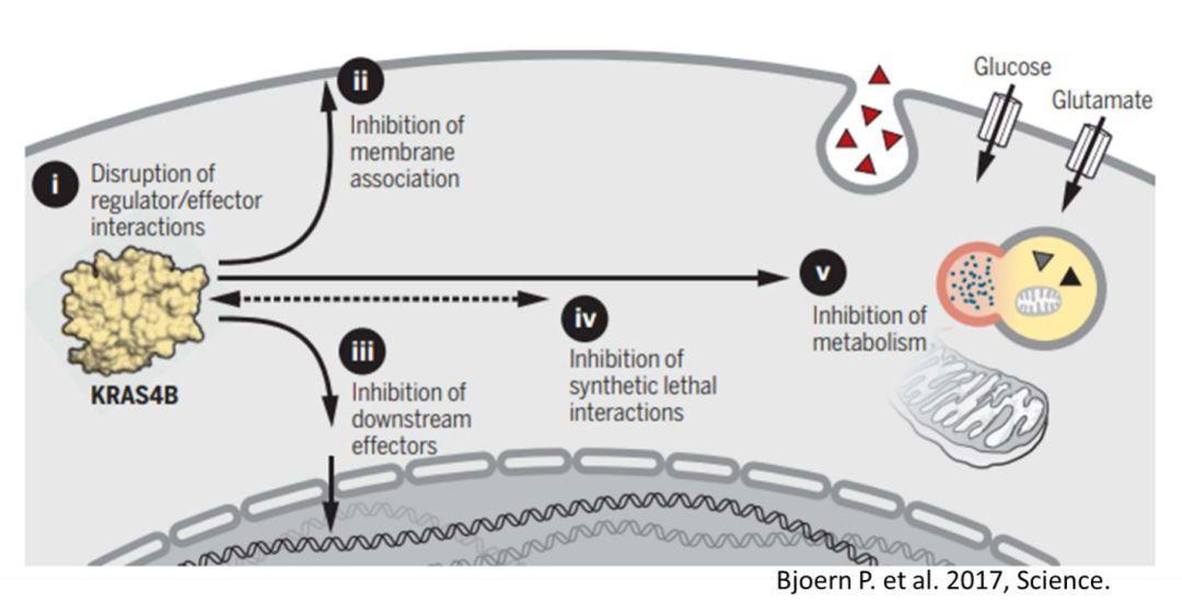 紫薯博士专栏 | 重磅突破!靶向RAS小分子药物最新进展