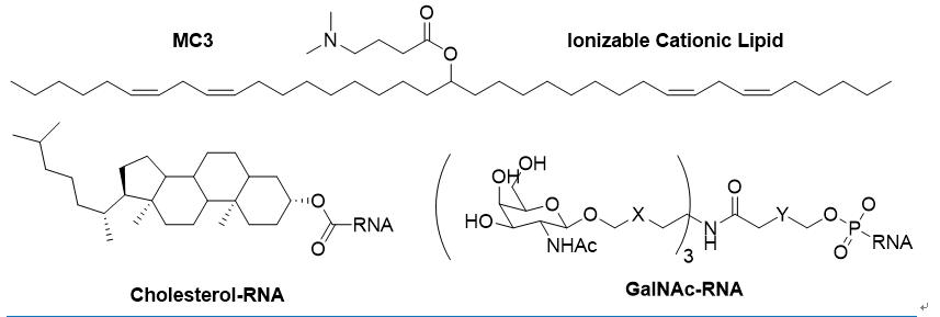 """谢雨礼博士   生物科技的下个10年:RNA药物""""王者归来"""""""