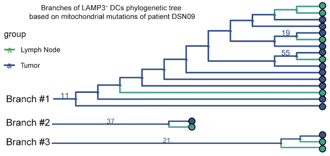 《Cell》重磅:北京大学张泽民课题组与勃林格殷格翰联合发表关于单细胞测序刻画肝癌免疫微环境动态特征的研究