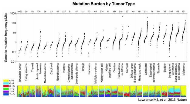肿瘤突变负荷会是下一个广谱型免疫疗法的生物标记物吗?