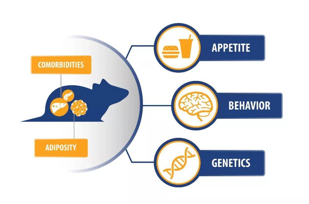 中美冠科网络公开课:临床前肥胖症研究-模型选择和实验设计的最佳策略 9月13日 10:30上线