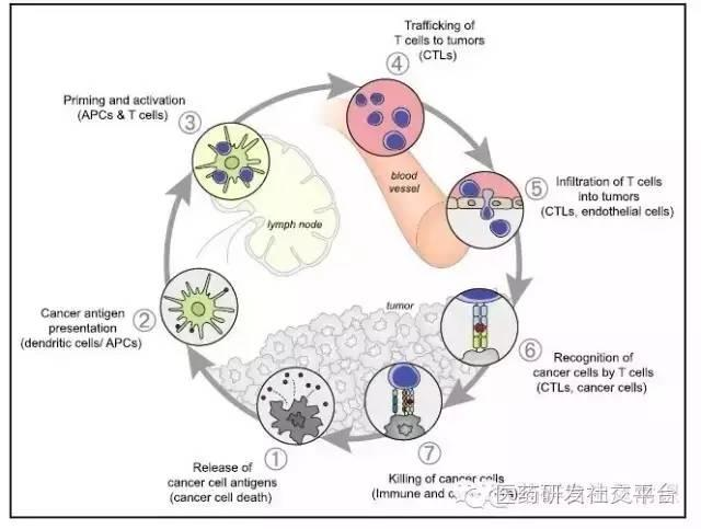 【徐姗姗博士】肿瘤免疫治疗最新进展!(附最新照片)