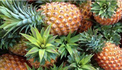 菠萝蛋白酶、酚妥拉明和山莨菪碱有望防治重症新型冠状病毒肺炎