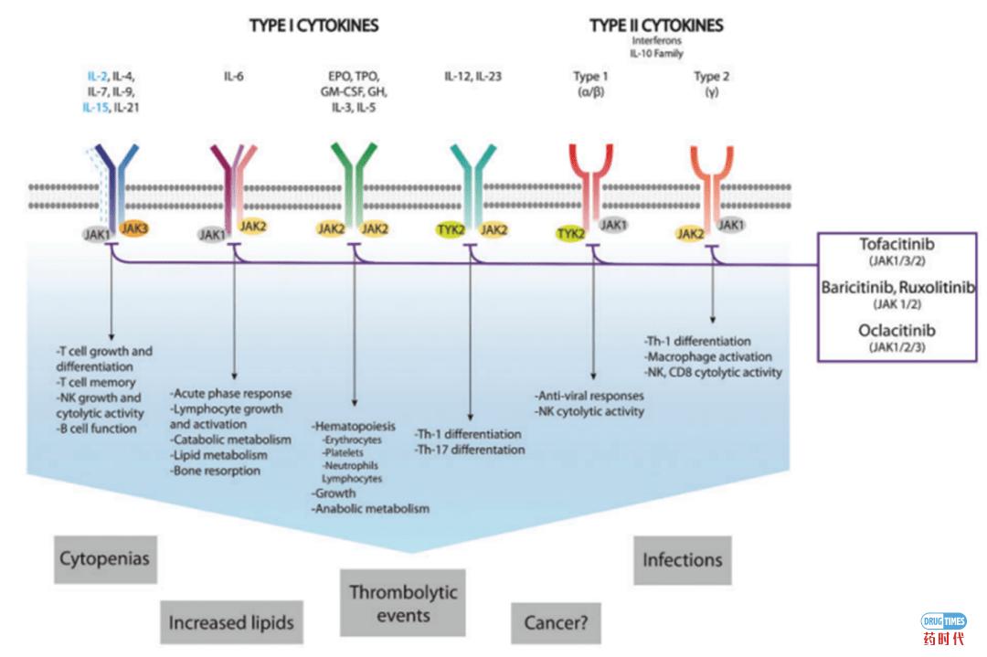 紫薯博士专栏 | 靶向JAK-STAT信号通路在炎性和自身免疫及新冠肺炎治疗中的开发应用
