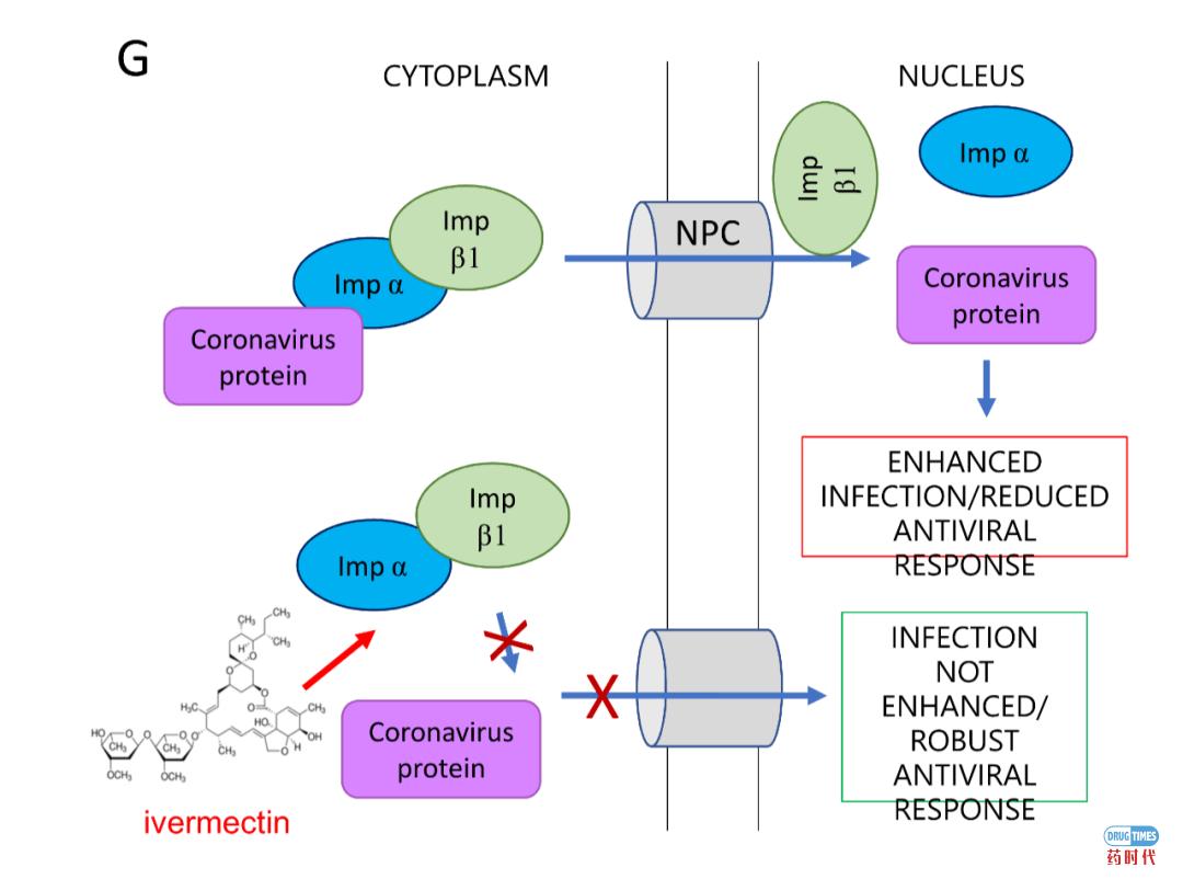 关注!FDA批准的抗寄生虫老药伊维菌素(Ivermectin)在体外抑制新冠病毒的复制