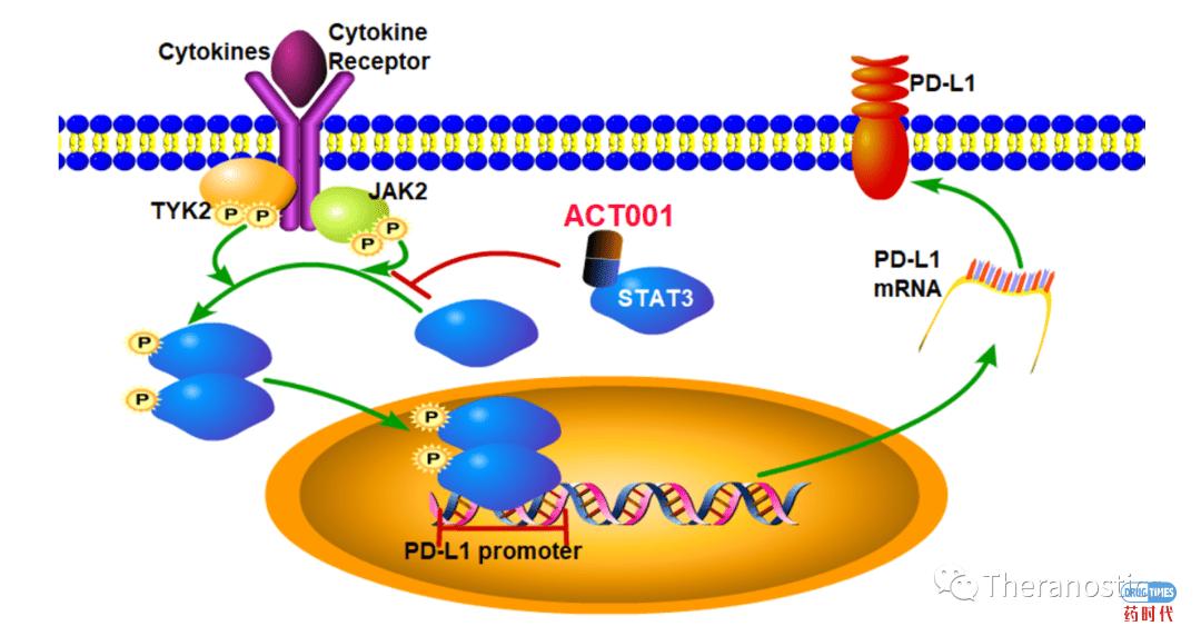 天津医科大学总医院神经外科杨学军教授发现我国原研新药ACT001能逆转脑胶质母细胞瘤中免疫检查点分子PD-L1的表达抑制肿瘤生长