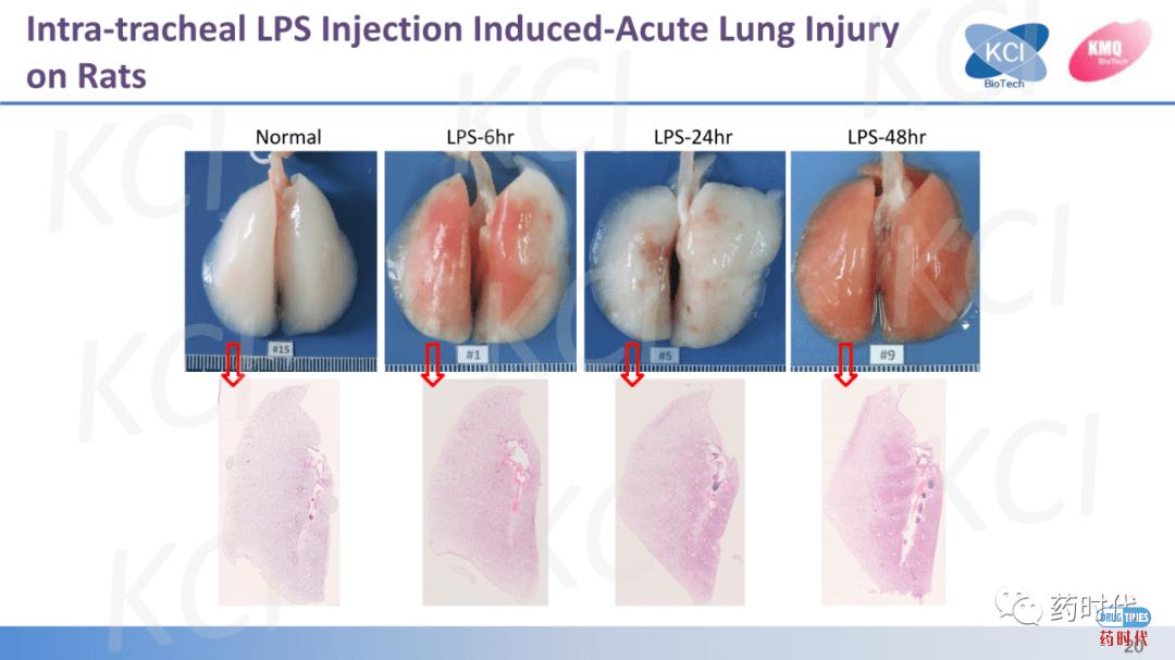 PPT分享 | 急性肺损伤与ARDS实验动物模型——从啮齿动物到兔的疾病模型比较