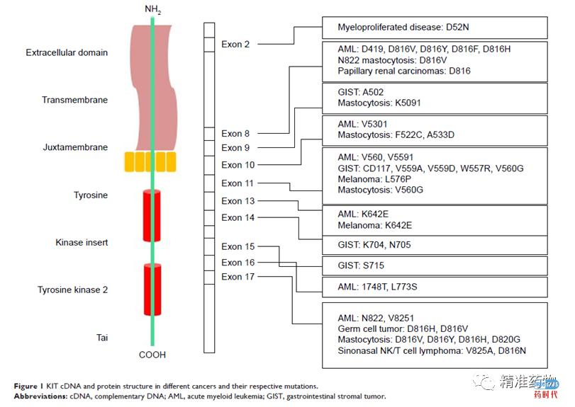 KIT/PDGFRA抑制剂靶向治疗胃肠间质瘤(GIST)的研究进展