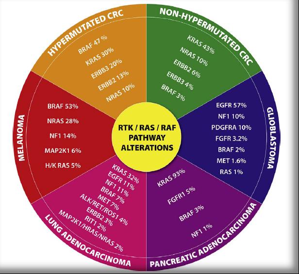 RAS-RAF-MEK-ERK:经典肿瘤信号通路的全线药物