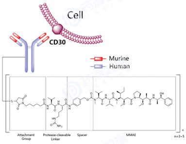 ADC药物研发的关键四要素及发展趋势