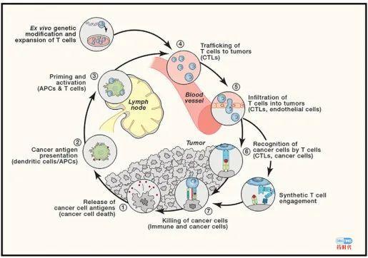 肿瘤免疫治疗的十大挑战