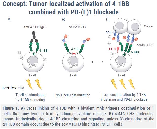 """如何避免PD-L1、4-1BB联合使用瓶颈?且看性能良好的三特异性抗体""""NM21-1480""""完成首例患者给药"""