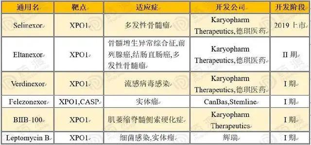 突破多发性骨髓瘤传统靶点,XPO1会成为下一个风口吗?