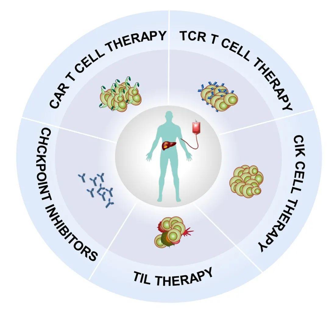 联盟喜讯|复旦大学基础医学院吴健课题组在《BBA Reviews on Cancer》发表进展期肝癌免疫治疗进展评述