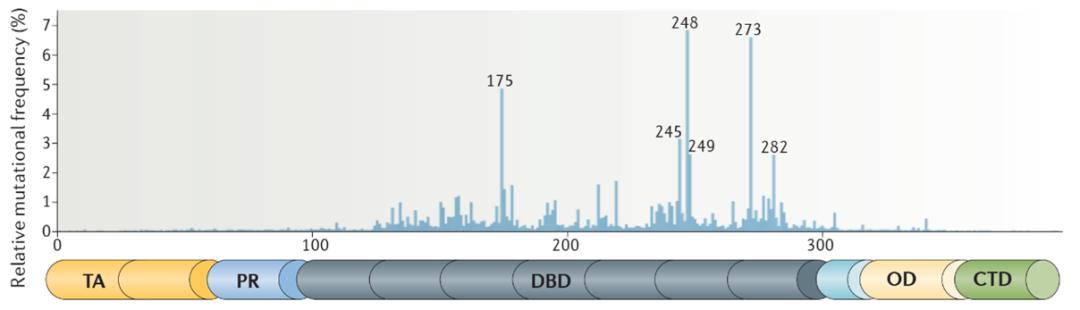 p53靶向药研发进展:何时缚住苍龙?