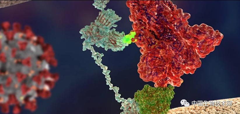 """狡兔三窟?Science重磅:又一个被新冠病毒""""勾结""""的蛋白"""