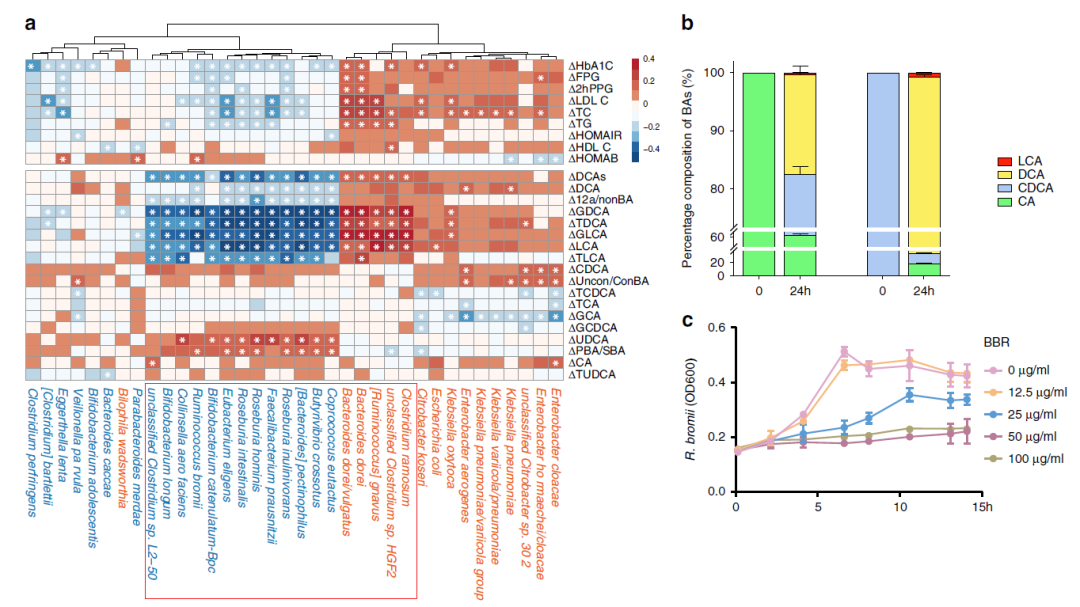 糖友福音!黄连素和Probiotics对治疗II型糖尿病患者的疗效分析