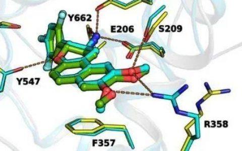 1类口服降糖新药马来酸博格列汀片获准进入临床研究