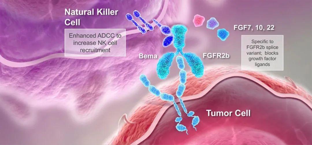 沉寂数年的Five Prime股价暴涨,bemarituzumab能否改变胃癌治疗现状?
