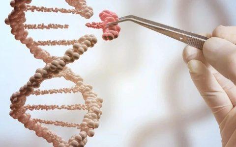 CRISPR编辑过的CAR-T在白血病模型中显现增强的活性