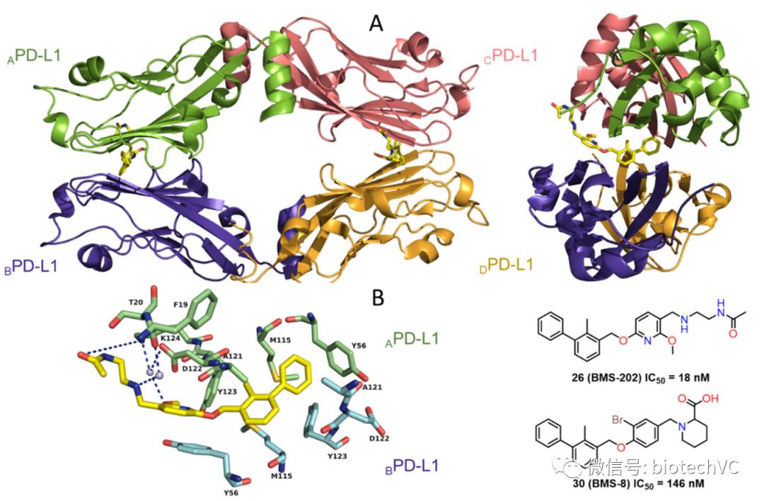 颠覆式创新:小分子PD-L1抑制剂能否破解PPI靶点成药难题?