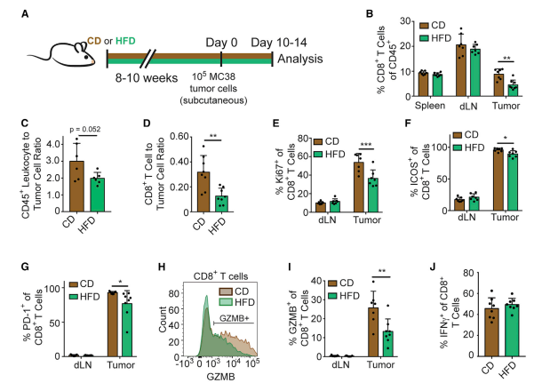 Cell 重磅:肥胖不但拉低颜值,而且抑制免疫细胞、促进癌细胞生长