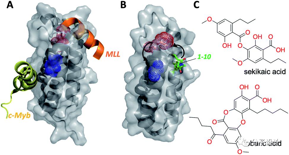 天然产物来源变构调节剂的药物研发展望