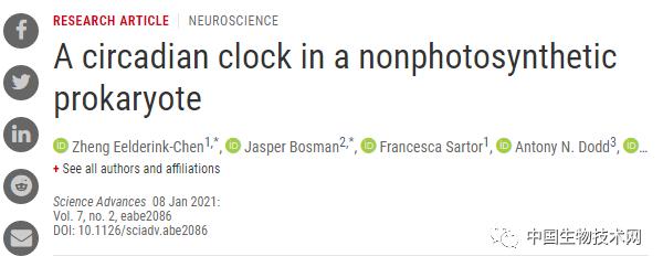 几点服药最有效?这项研究带来新线索:科学家首次发现多功能细菌也有生物钟