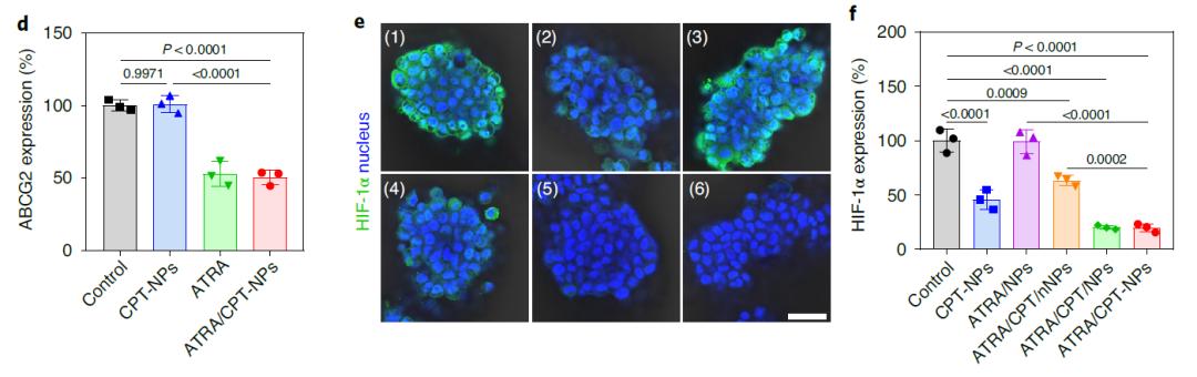 Nature子刊:癌症克星!中国药科大学莫然团队开发新型纳米载体,克服肿瘤异质性并减少耐药性