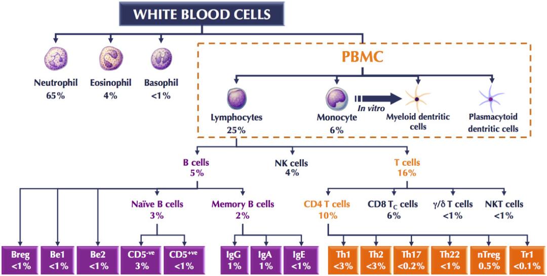 CAR-T疗法大揭秘 | 血液瘤4年生存率44%!表现神勇的CAR-T细胞,是从哪里来的?