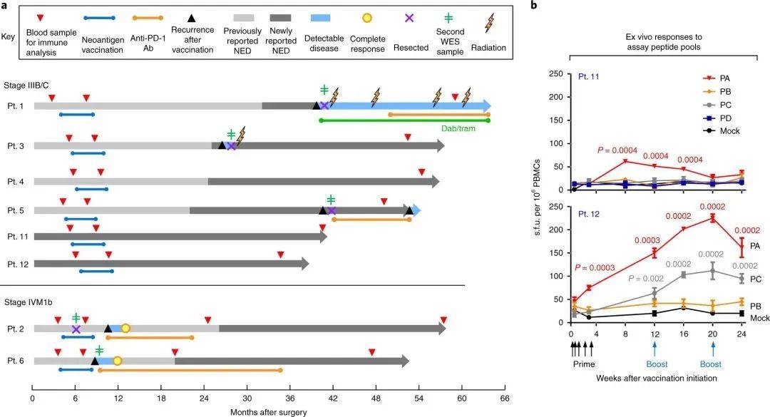 癌症疫苗突破:个性化新抗原,实现四年强效持久抗癌