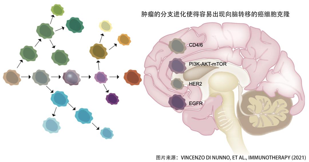 实体肿瘤脑转后,神药PD-1到底入不入脑?