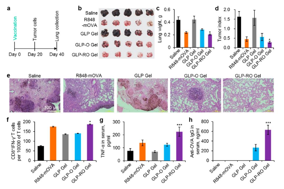 可持久预防治疗癌症,我国学者开发水凝胶缓释mRNA癌症疫苗