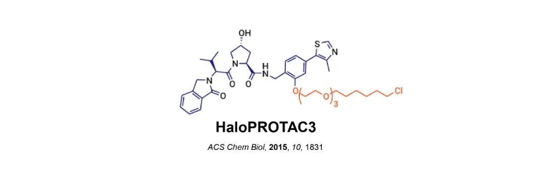 HaloPROTAC强势登场,蛋白降解研究再添新秀