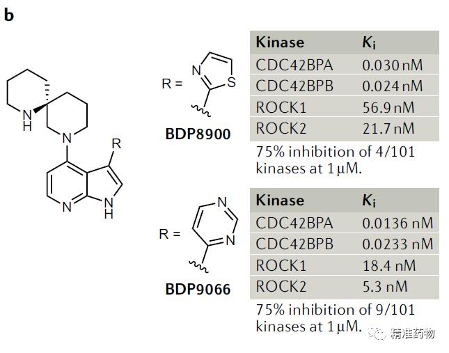 【Nat Rev Drug Discov】肿瘤新靶标:CDC42BPA/MRCKα激酶