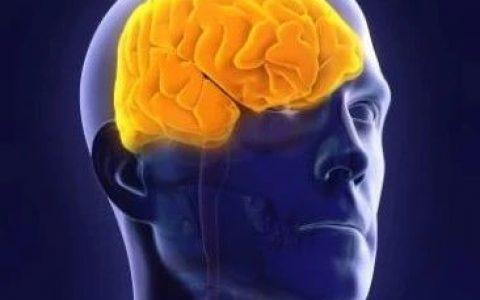 Cell重磅:用益生菌治疗大脑疾病,改善社交行为!