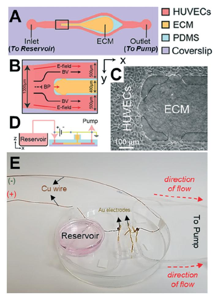 最新研究发现:电刺激能够加快伤口愈合