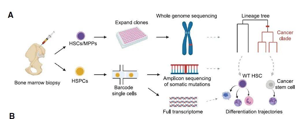哈佛大学发现:63岁患癌,19岁时癌细胞已开始在身体中出现了