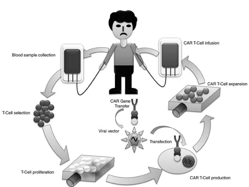 全球创新疗法系列(二):CAR-T等细胞免疫疗法技术进展
