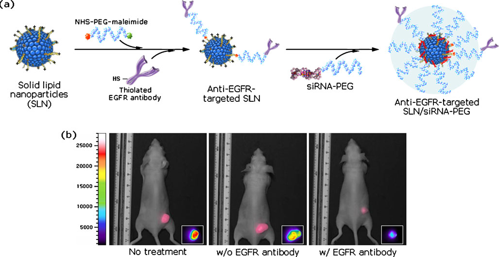 万字长文!自组装纳米结构siRNA递送系统