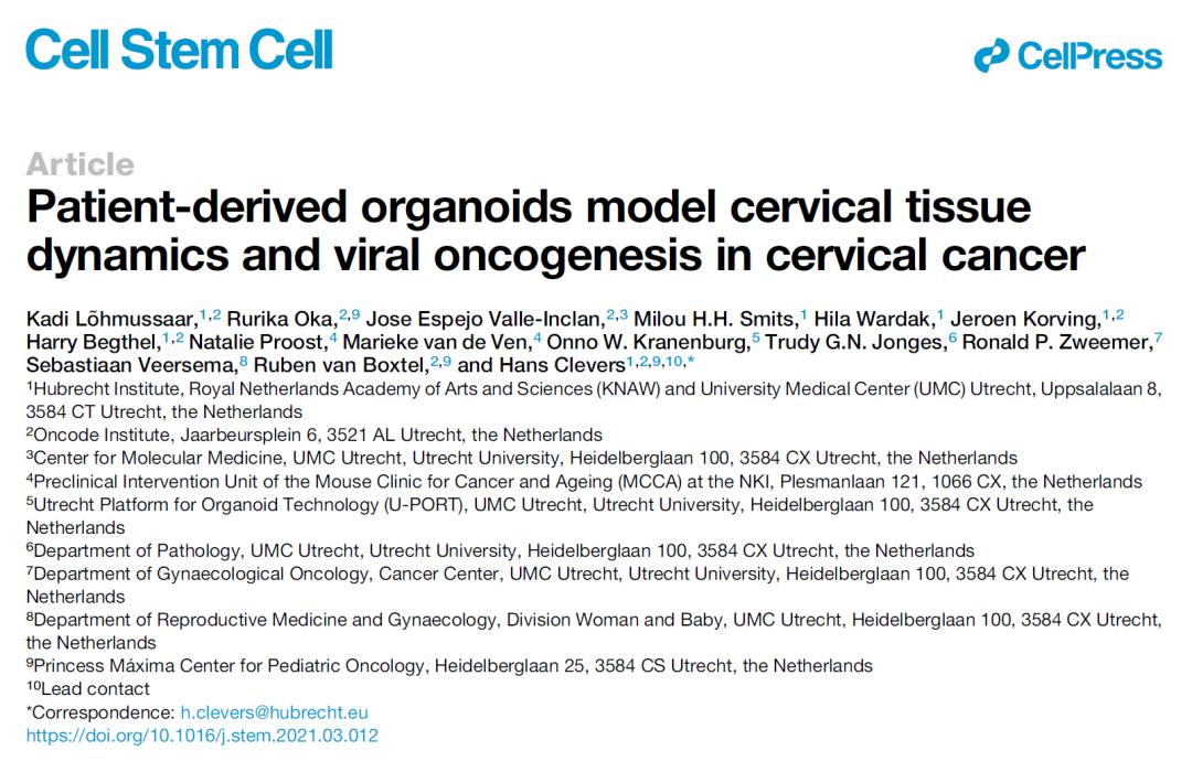 Cell子刊:首个患者来源的宫颈癌类器官模型,为宫颈癌研究提供新手段
